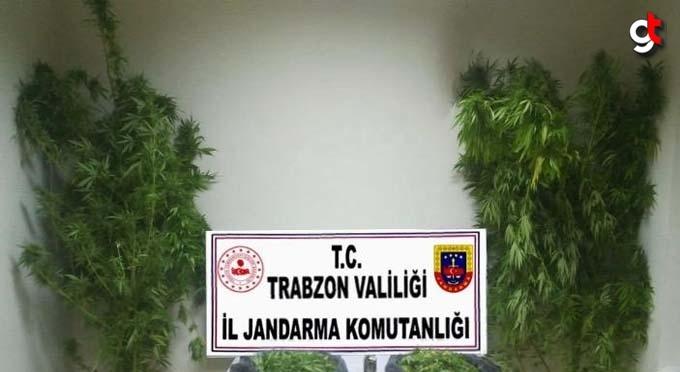 Trabzon'da 5,2 kilogram uyuşturucu ele geçirildi