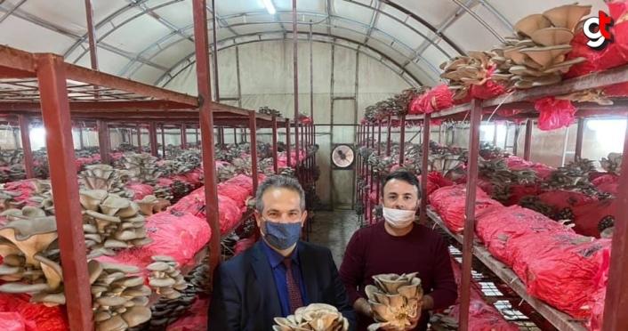 Tarım ve Orman Müdürü Önder'den inceleme