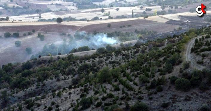 Tokat'ta çıkan orman yangınında 3 hektar alan zarar gördü