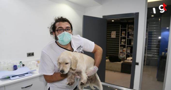 Samsun'da bacakları kesilmiş halde bulunan köpeğe HAYTAP sahip çıktı