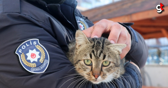 Sokak kedileri emniyet ekiplerinin maskotu oldu
