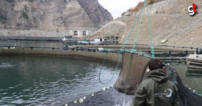 Torul Barajı gölünde yıllık 1200 ton balık üretiliyor