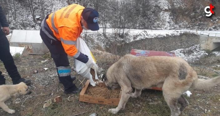 Trabzon'da sokak hayvanlarına mama dağıtıldı