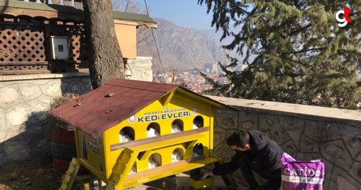Amasya'da sokağa çıkma kısıtlamasında sokak hayvanları unutulmadı