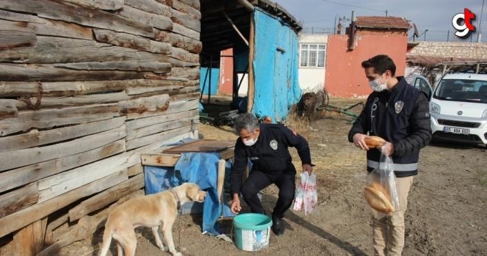 Amasya'da Vefa Sosyal Destek Grubu üyeleri 3 gündür aç olan köpeği besledi