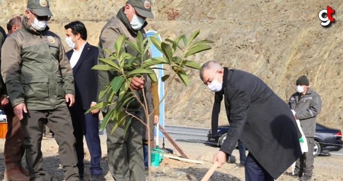 Artvin'de 26 bin meyve fidanı toprakla buluşturuldu