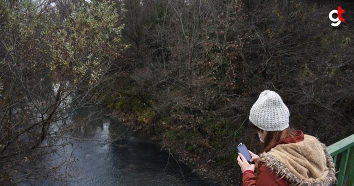 Bartın Irmağı'nda akıntıya karşı yüzen yavru balıklar ilgi uyandırdı