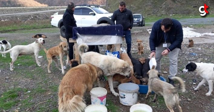 Canik Hayvanseverler Derneği, sahipsiz sokak hayvanlarının aç kalmaması için mama dağıttı