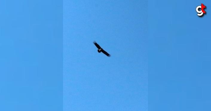 Kara akbabaların yuvası: Köroğlu Dağları
