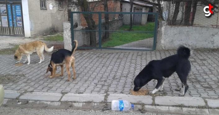 Karabük'te sokağa çıkma kısıtlamasında sokak hayvanlarına mama desteği verildi