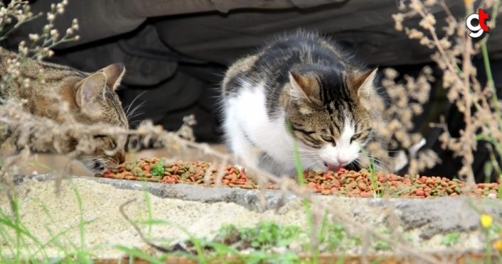 Kastamonu'da güvercinler Sinop'ta sokak hayvanları unutulmadı
