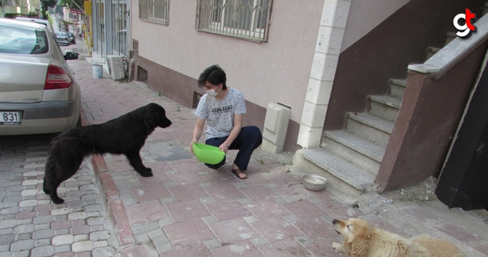 Kavak'ta hayvanseverler sokak hayvanlarını unutmadı