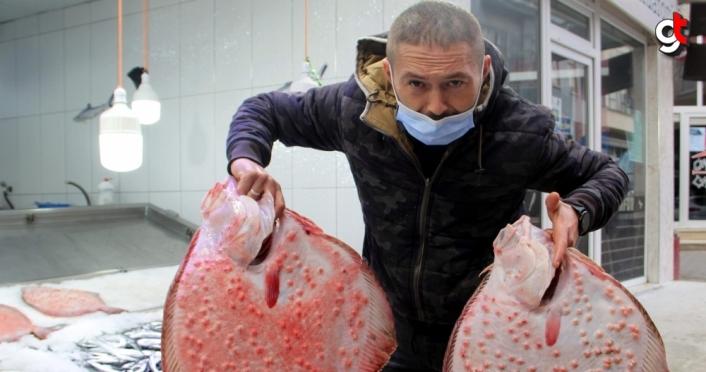 Sinop'ta ağlara takılmaya başlayan kalkan balığı kilosu 200 liraya kadar satılıyor