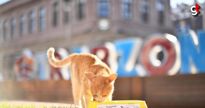 Trabzon'da hafta sonu kısıtlamasında sokak hayvanları unutulmadı