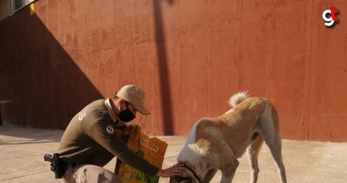 Giresun'da sokak hayvanlarını kısıtlamada polisler besledi
