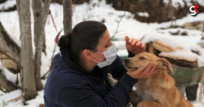 Kastamonu'da başını plastik boruya sıkıştıran köpeği vatandaşlar kurtardı