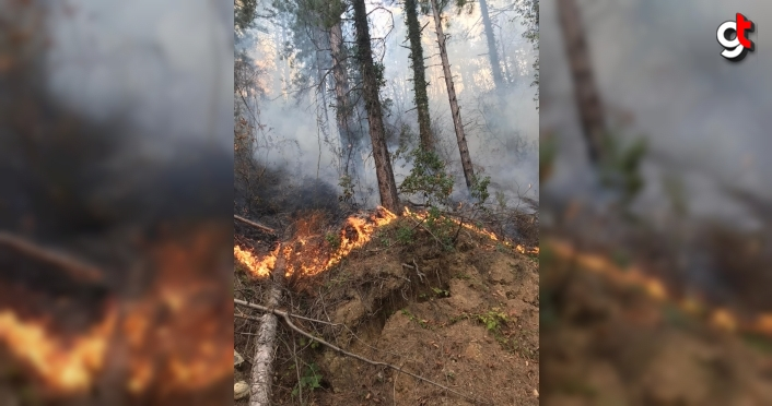 Kastamonu'da çıkan orman yangını kontrol altına alındı