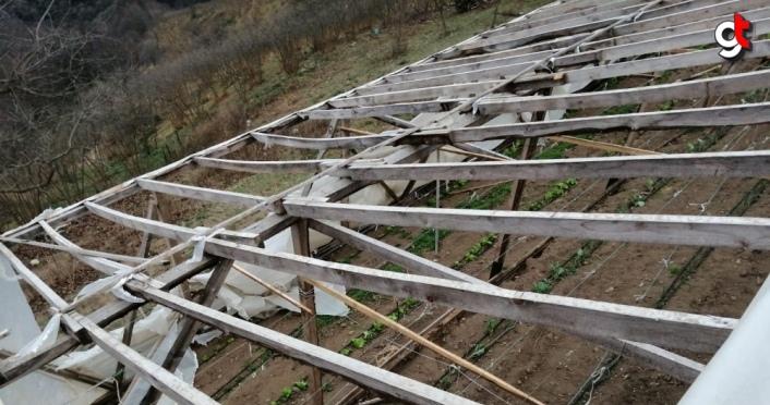 Ordu'da şiddetli rüzgar maddi hasara neden oldu