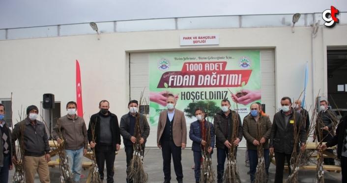 Suluova Belediyesi köylere bin ceviz fidanı dağıttı