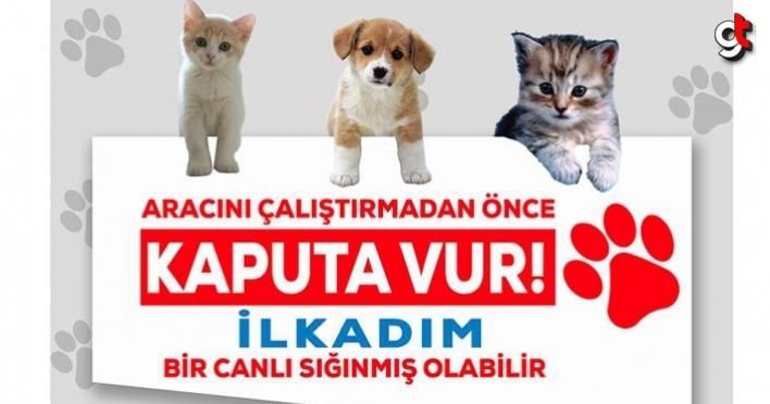 AK Parti İlkadım Gençlik Kolları, 'Kaputa Vur' Farkındalığı