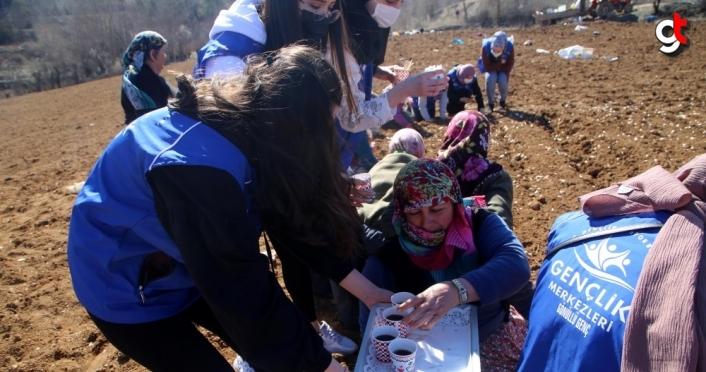Gönüllü gençler imece usulüyle Taşköprü sarımsağını toprakla buluşturdu