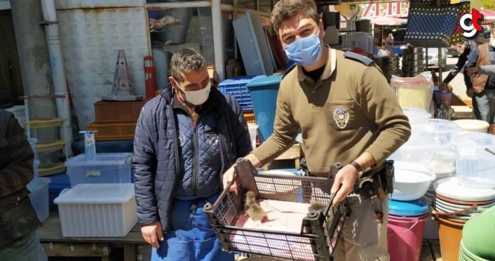 Bolu'da 4 yavru kedi tedavi altına alındı