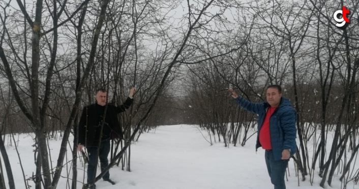 Çarşamba'da yüksek kesimlerde kar yağışı üreticileri endişelendirdi