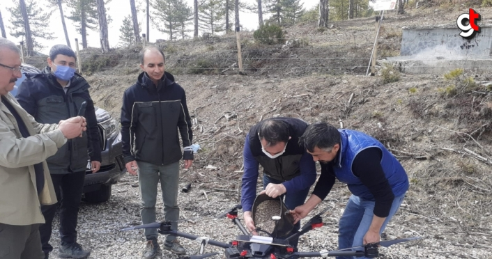 Göynük'te karaçam tohumları drone ile toprakla buluşturuldu