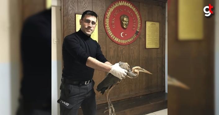 Kastamonu'da uçamayan balıkçıl kuşu koruma altına alındı
