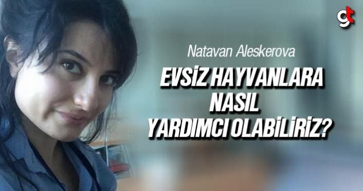 Natavan Aleskerova, Evsiz Hayvanlara Nasıl Yardımcı Olabiliriz?