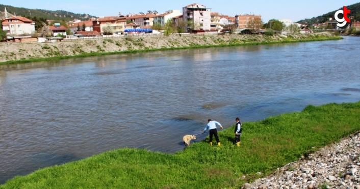 Yeşilırmak Nehri'nde mahsur kalan köpek itfaiye ekiplerince kurtarıldı