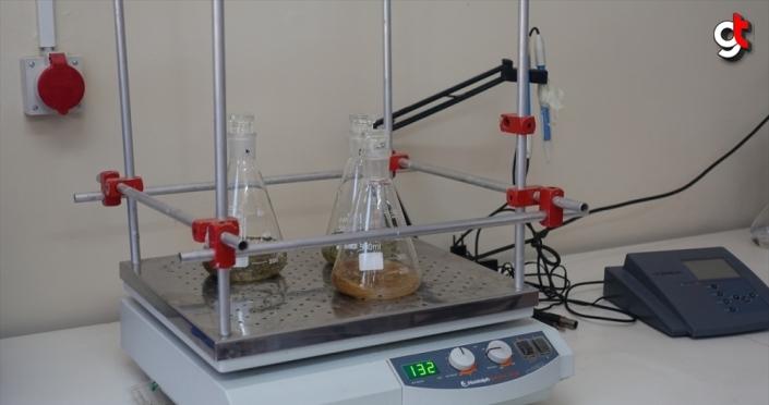 Aromatik bitkilerden elde edilen özüt ile ahşabın dayanıklılığının attırılması hedefleniyor