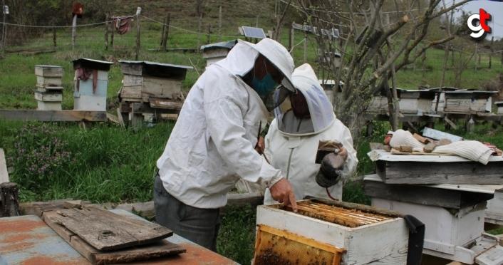 Bolu'da arıların bahar hazırlığı başladı