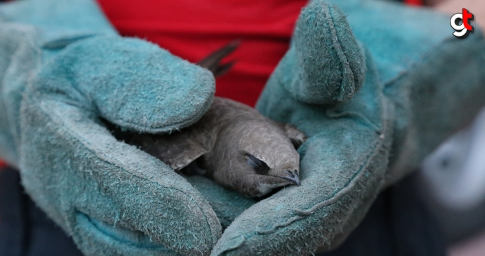 Bolu'da balkona düşen ebabil kuşunu itfaiye kurtardı