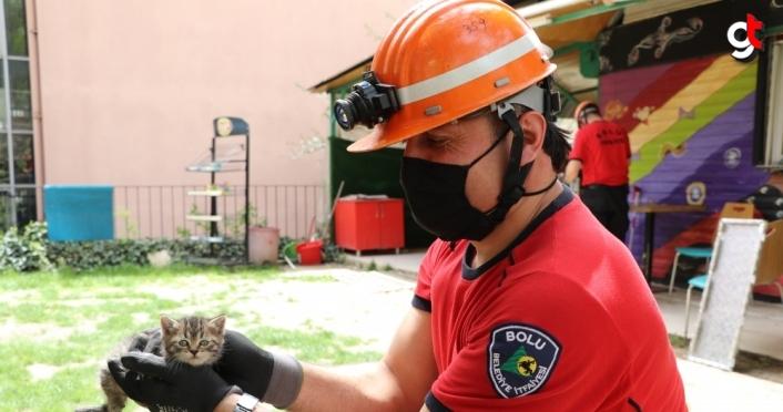 Bolu'da büfenin çatısında sıkışan 3 yavru kedi cep telefonundan açılan kedi sesiyle kurtarıldı