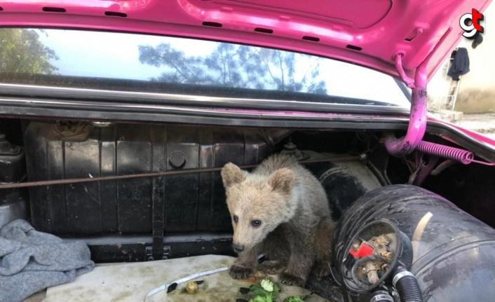 Bartın'da köpeklerce sıkıştırılan yavru ayı, bölgedeki arıcı tarafından kurtarıldı