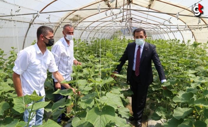 Bolu'da topraksız tarım ürün vermeye başladı