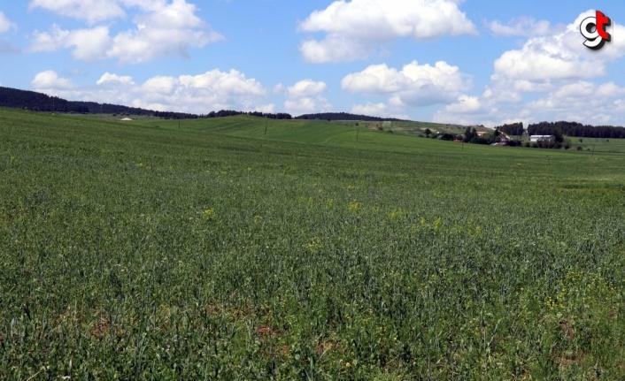 Eflani'de 110 bin dekar tarım arazisi işlendi