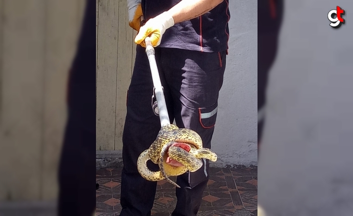 Karabük'te eve giren 2 metre uzunluğundaki yılanı itfaiye yakaladı