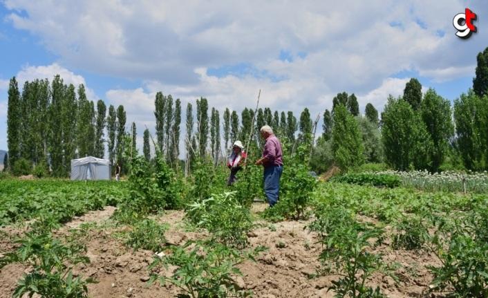 Emekli olup döndüğü köyünde organik tarıma başladı