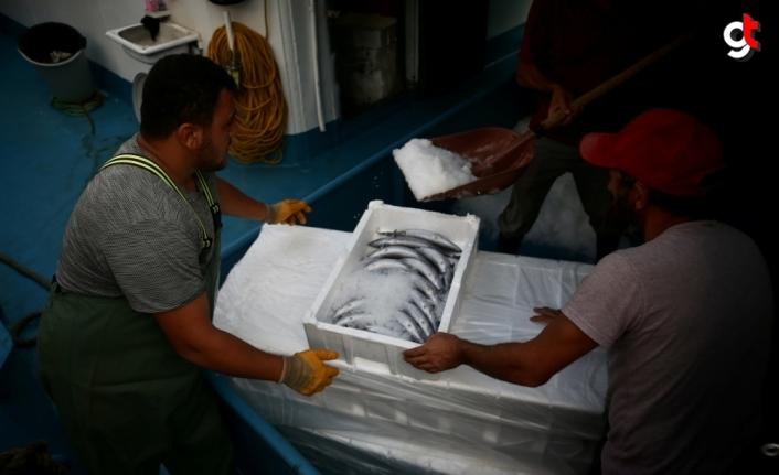 Düzce'de balıkçılar limana binlerce palamutla döndü