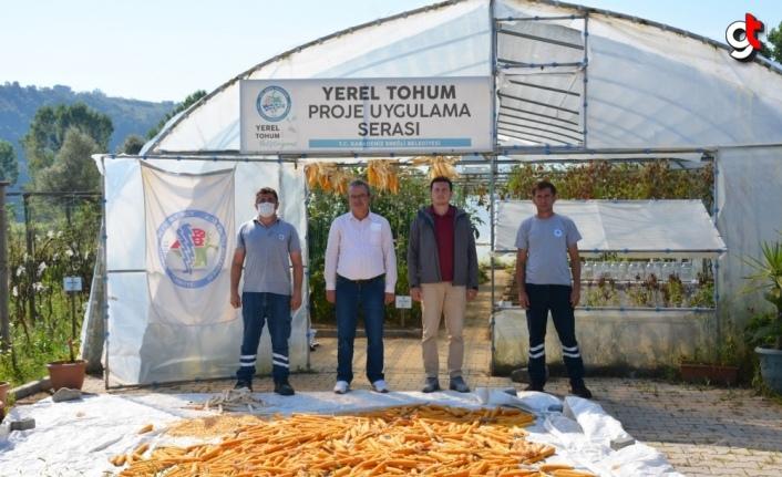 Ereğli'de 14 çeşit yerel tohum üretildi