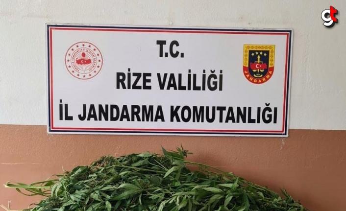 Rize'de evinde esrar ele geçirilen zanlı gözaltına alındı