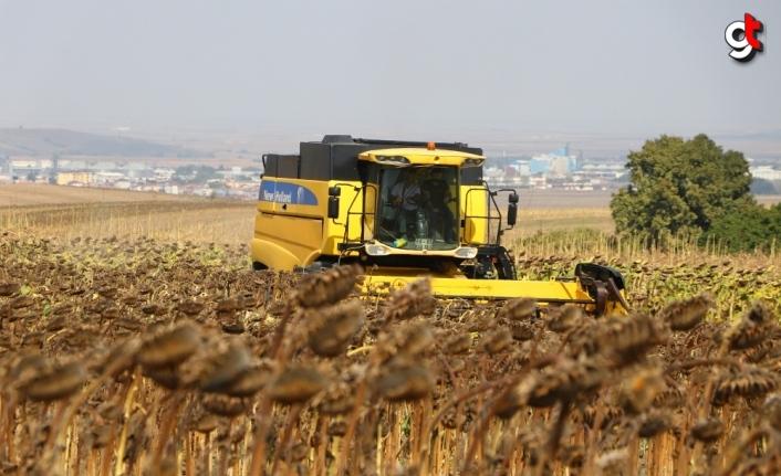 Tekirdağ'da yerli ayçiçeği tohumu geliştirilmesi projesi kapsamında yetiştirilen ürünler hasat edildi