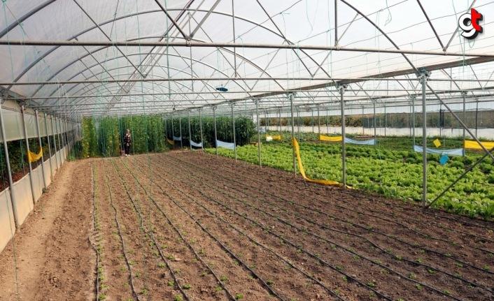 Kadın girişimci devlet desteğiyle büyüttüğü serasında sebze üretiyor
