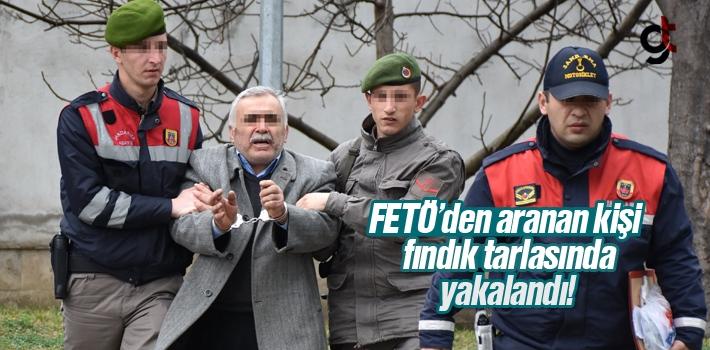 FETÖ'den Aranan Bir Kişi Fındık Tarlasında Yakalandı
