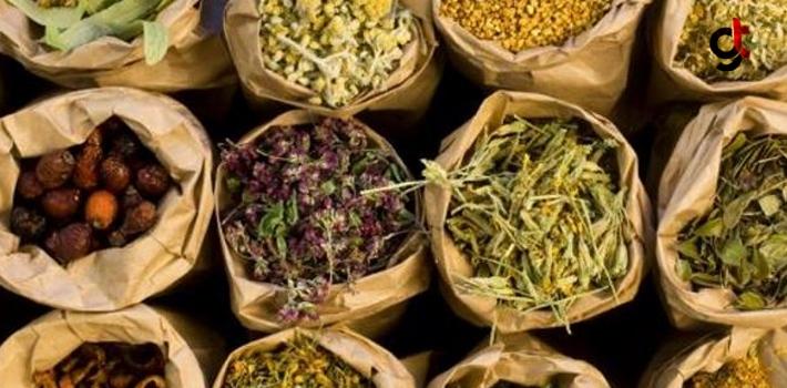 Kanser Tedavisinde Doğal Ve Bitkisel Ürünlerin Etkisi!