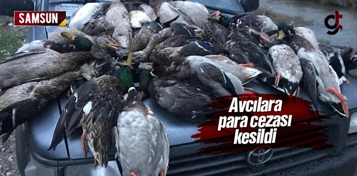 Samsun Kuş Cenneti'nde Ördekleri Öldüren Avcılara Para Cezası Kesildi