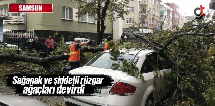 Samsun'da Sağanak Ve Şiddetli Rüzgar Ağaçları Devirdi