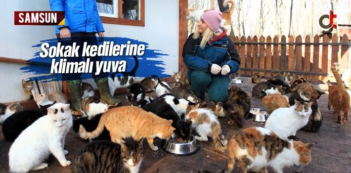 Samsun'da Sokak Kedilerinin Yuvası Klima İle Isınıyor